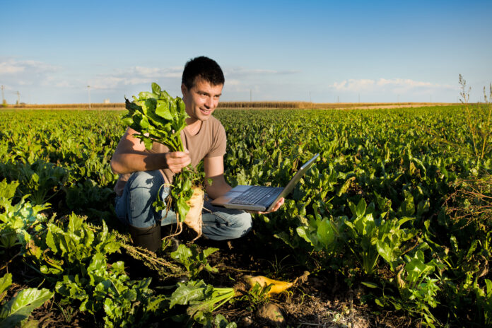 Farmer in sugar beet field